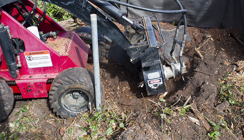 Stump Grinding and Removal Services in Brisbane
