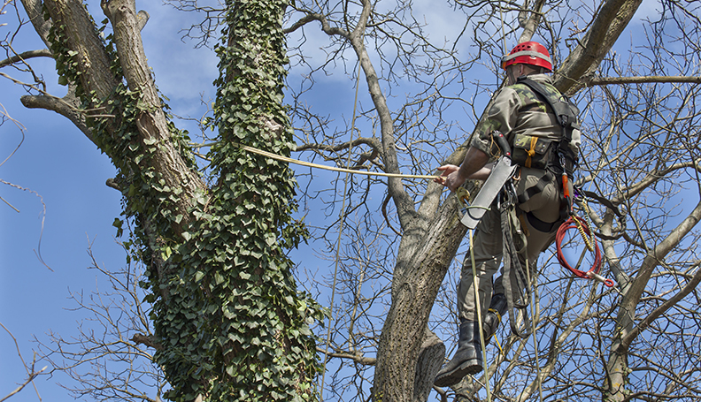 Tree Pruning and Trimming Services in Brisbane