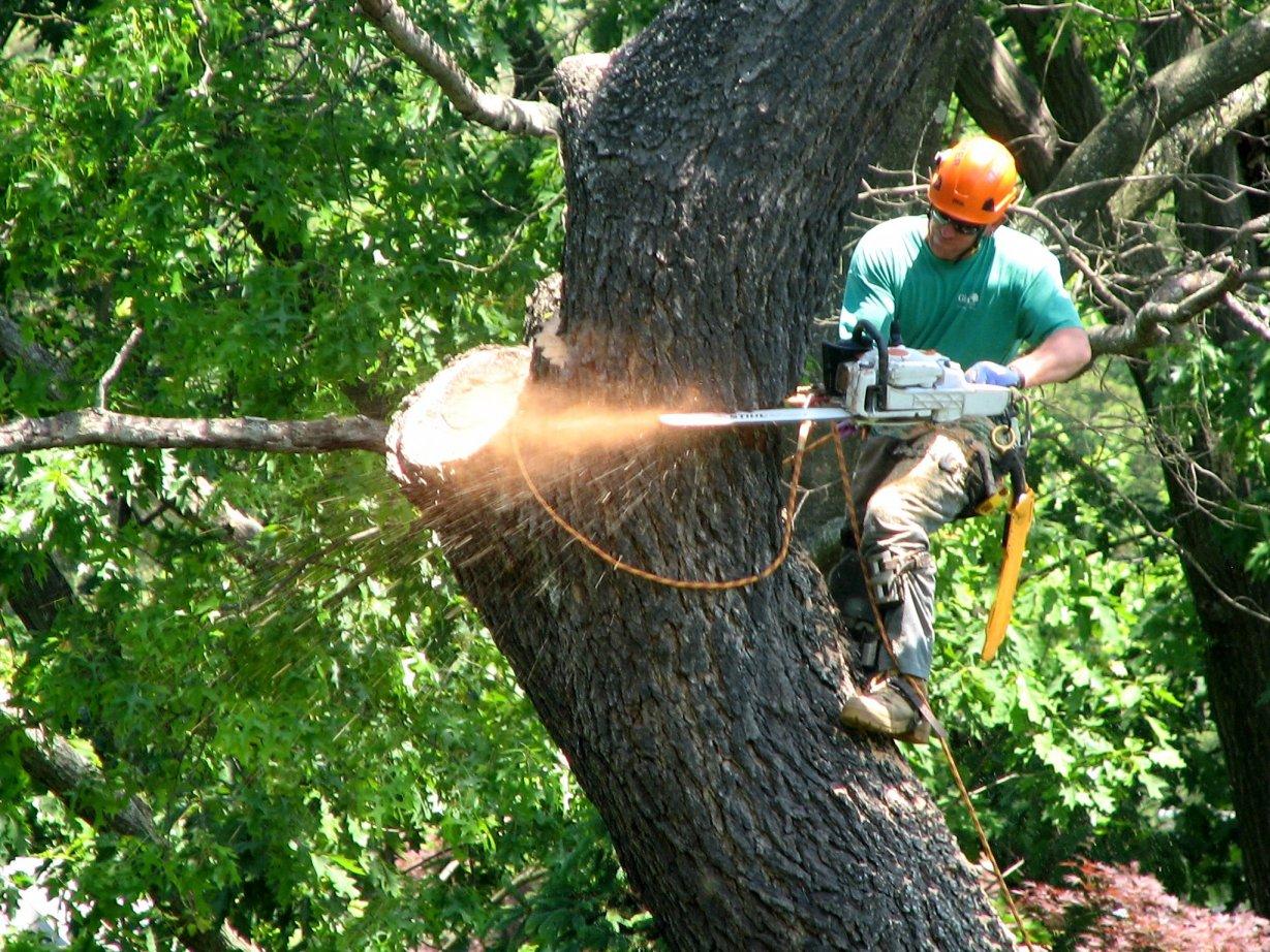 Brisbane Tree  Removal